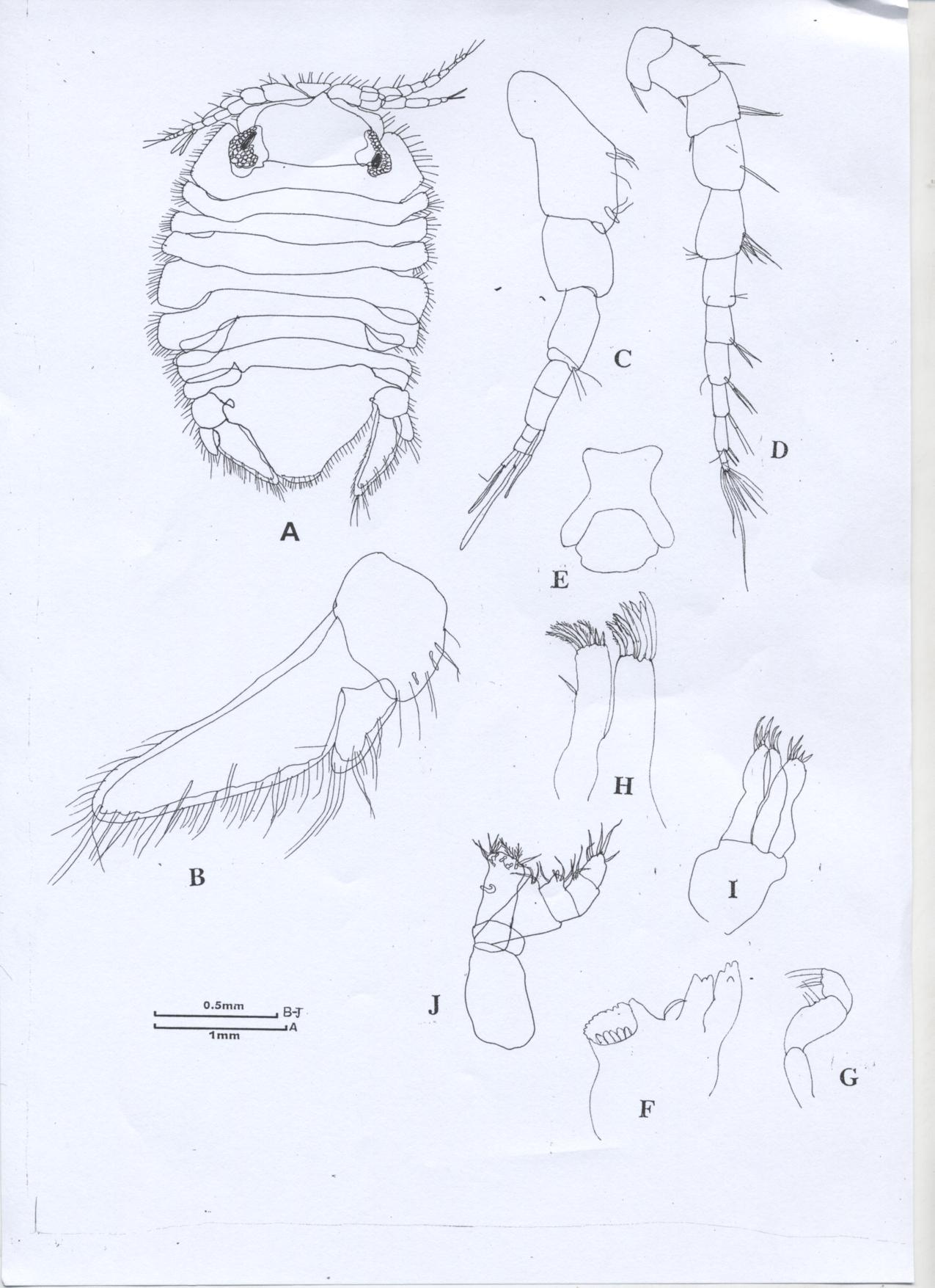Heterodina qeshmensis Khalaji & Bruce, 2014 [6], A, dorsal view; B, uropod; C, antenna 1; D, antenna 2; E, epistome; F, left mandible; G, mandible palp; G, maxilla 1; H, maxilla 2