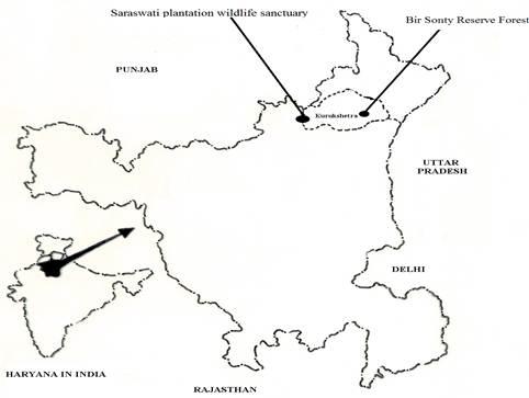 Saraswati Plantation Wildlife Sanctuary and Bir Sonty Reserve Forest in district Kurukshetra, Haryana (India).